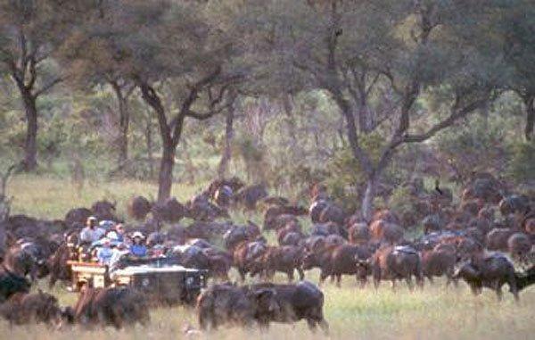 2001-07-08 Kruger Park 001