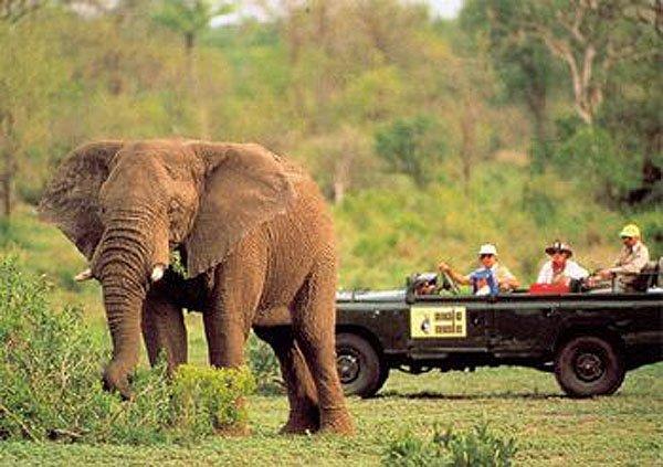 2001-07-08 Kruger Park 002