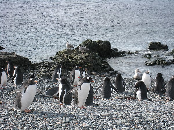 2008-03-13 King George Island Antarctica 013
