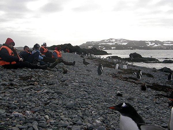 2008-03-13 King George Island Antarctica 038