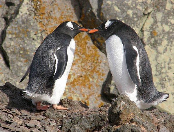 2008-03-13 King George Island Antarctica 041