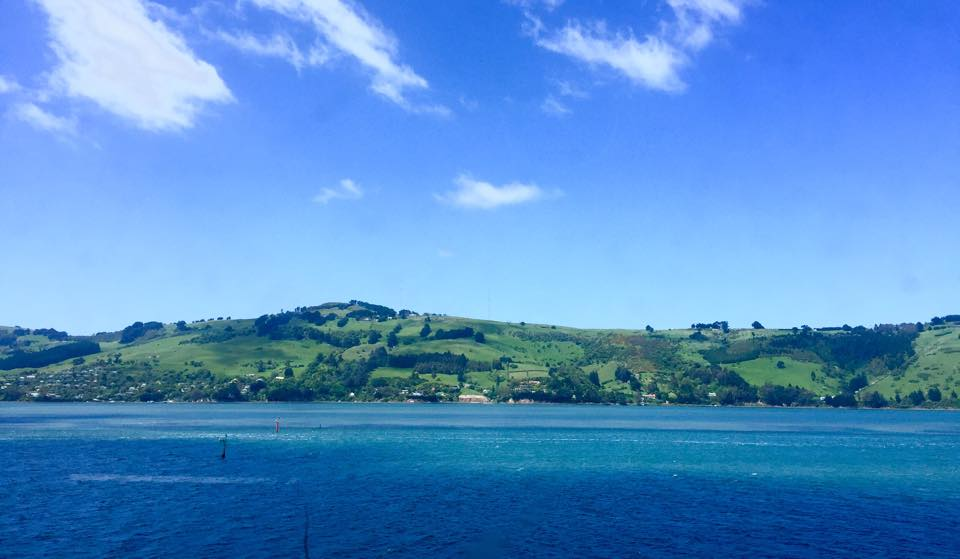 2016-11 Dunedin New Zealand (2)