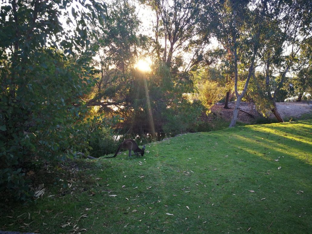 2018-04-08 Yanchep National Park Australia (12)